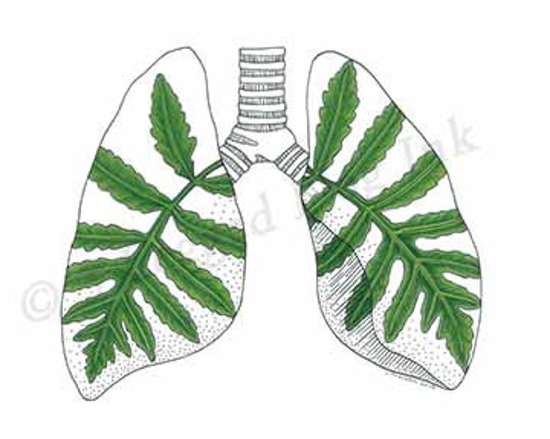 Lungs Print image 0