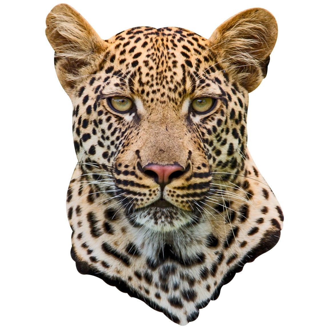 морда леопарда фото рисунок симптома является