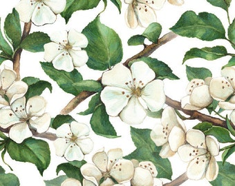 Painted Magnolias Wallpaper Decal 8.5 Foot