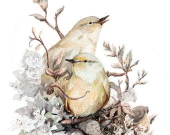 Warbler and Chiffchaff - Original A4 art print