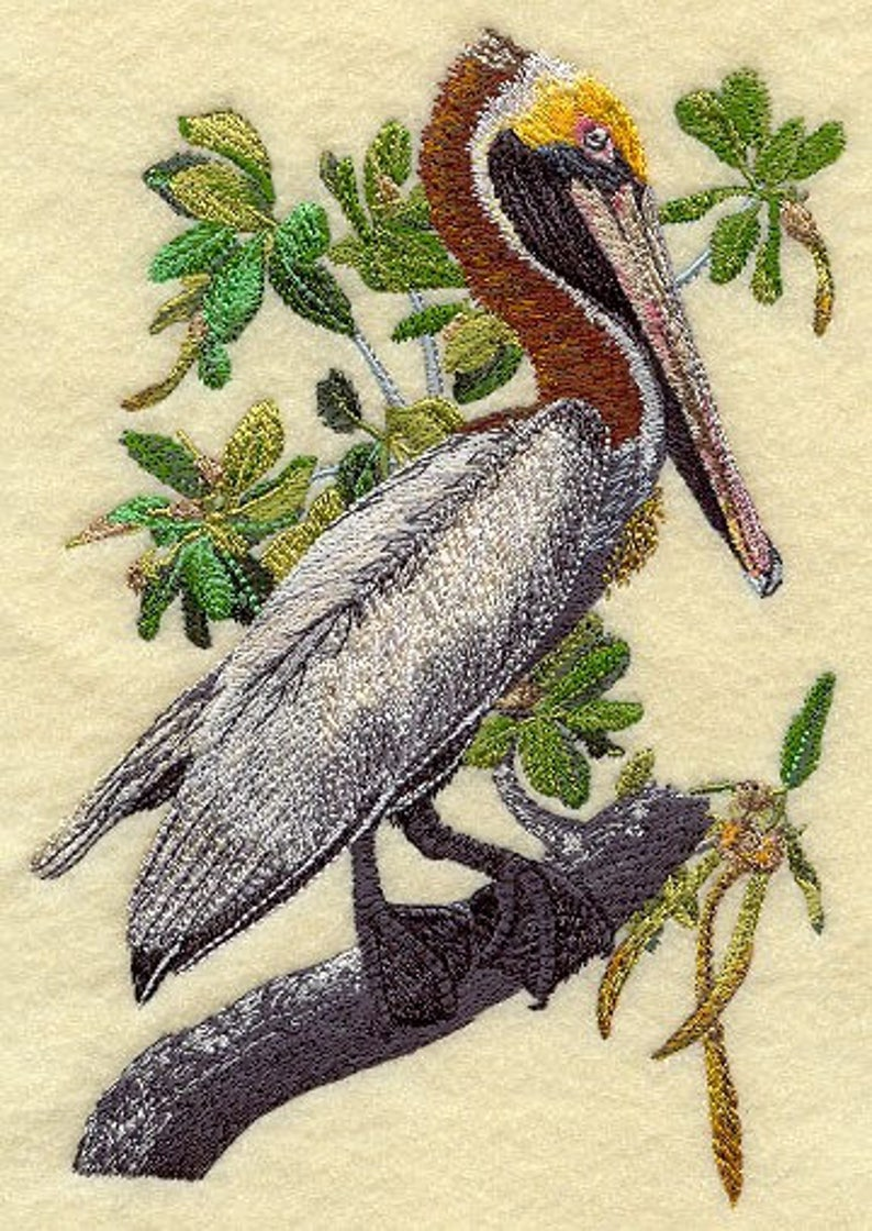 PELICAN on' Sweat or Tee by Rosemary image 0