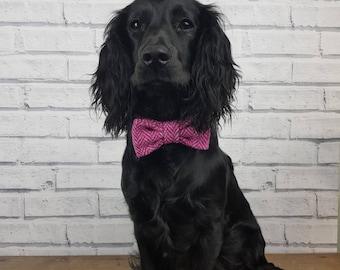 Pink Harris Tweed Dog Bow Tie