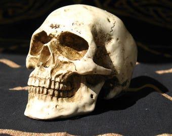 PRICE REDUCED!~Human Skull Replica~Small~Bone colored~Altar and home Decoration~Ancestors