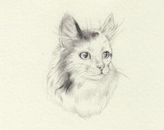 Pencil Forest Cat
