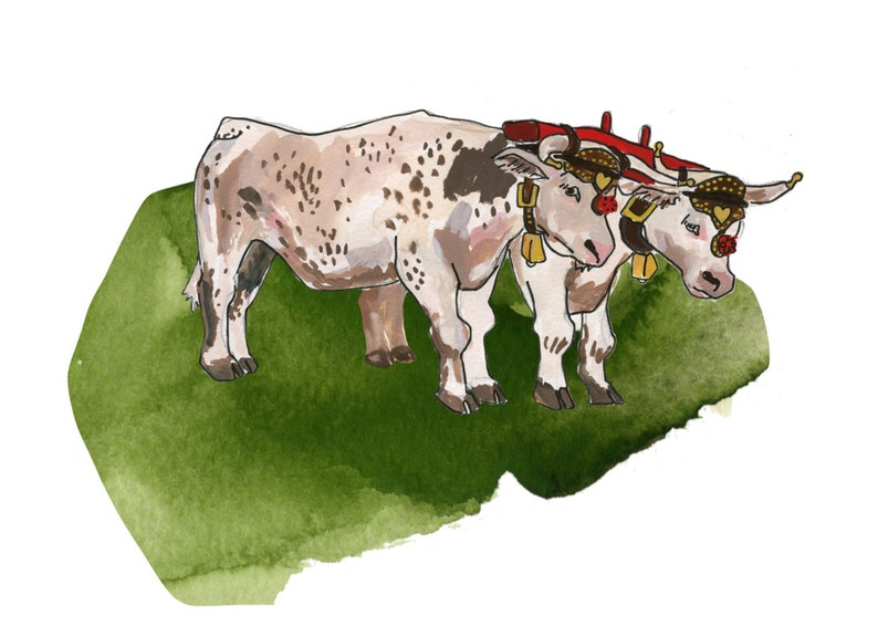 Oxen  Limited Edition Print of a Watercolour original  image 0
