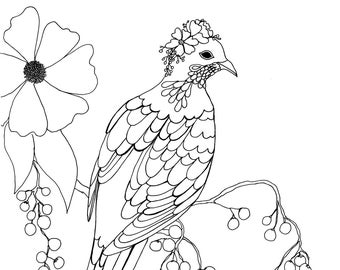 Fancy Pigeon with Berries Colouring Page