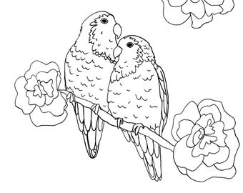 Peach-faced Love Birds Colouring Page