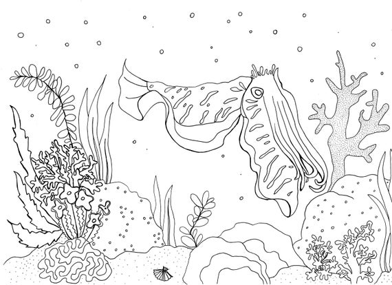 - Cuttlefish Coral Reef Colouring Page Etsy