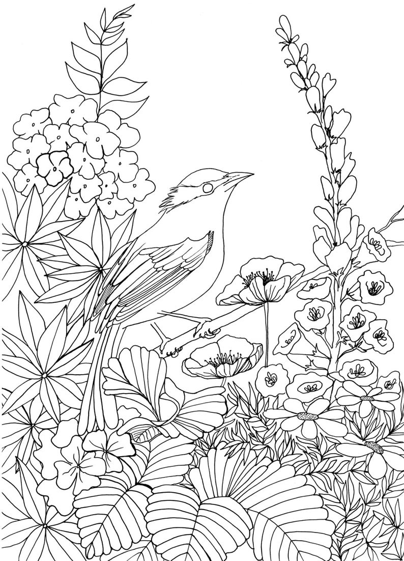 Bird in Chelsea Garden Colouring Page | Etsy