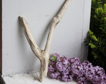"10"" Driftwood Y , Unique Jewelry Photo Prop , Beach Home Decor , Boho Art Supply"