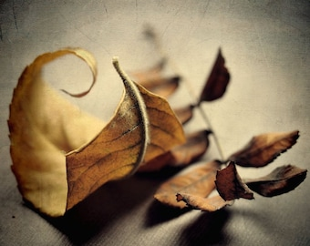"""Still life photography yellow golden tan brown rustic leaves modern decor  - """"Brown leaves"""" 8 x 10"""