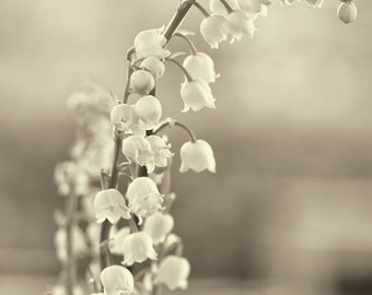"""Flower photography, lily of the valley, floral print, monochrome, spring, still life, garden, botanical - """"Lilies"""""""