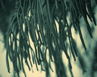 "Botanical print spring art dark minimal green floral photography dreamy nature - ""Greenery"" 8 x 10"