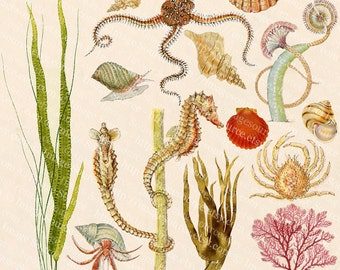 Marine Life, Sea Creatures Digital Collage Sheet, Color Scrapbooking Clipart, Printable Images