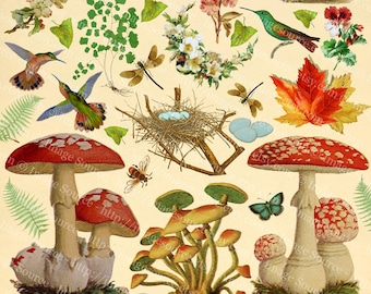 Digital Collage Sheet, Woodland Plants and Animals, Mushrooms Scrapbook Paper, Forest Nature Printable Download