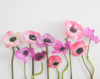Anemone Floral Photography, Anemones, Floral Art, Pink, Botanical Still Life Print, Anemone Photograph, Gallery Wall, Pink Floral Photo