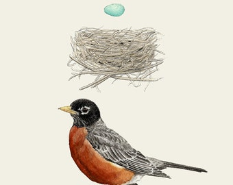 American Robin Nest and Egg Group 5x7 print