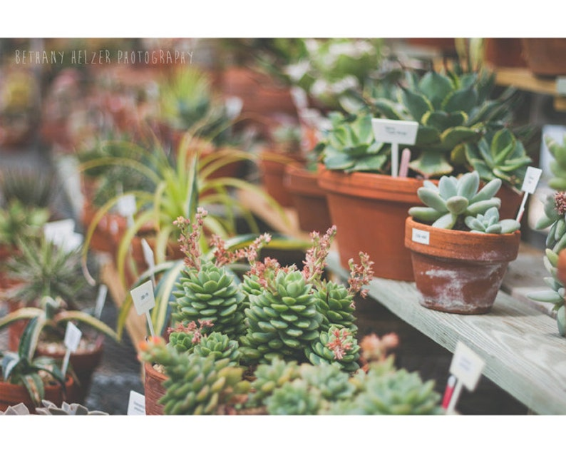 Succulent Photograph Greenery Nature Photography Plant image 0
