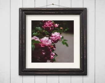 Dreamy Flower Photography - Nature Photography Botanical Print Rose Garden Art Pink Roses Print Dreamy Photography Shabby Chic Square Print