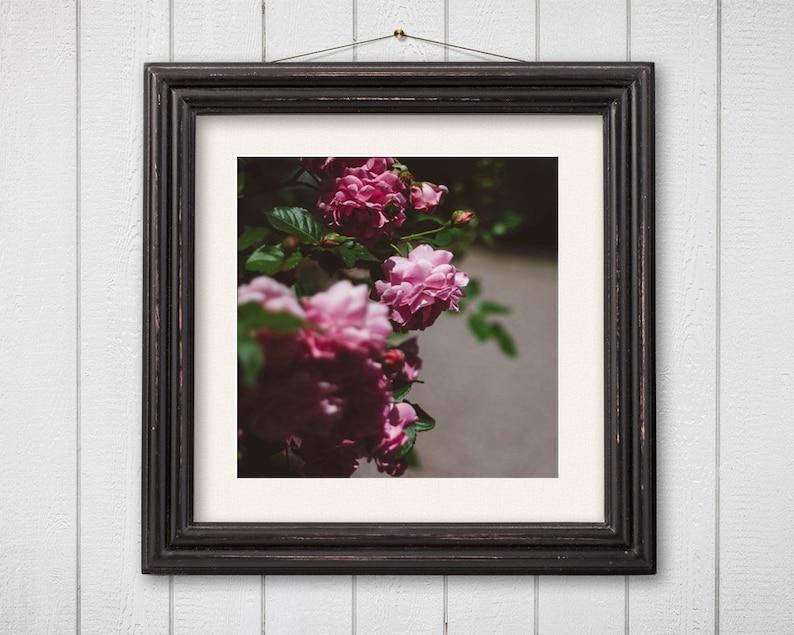 Dreamy Flower Photography  Nature Photography Botanical Print image 0