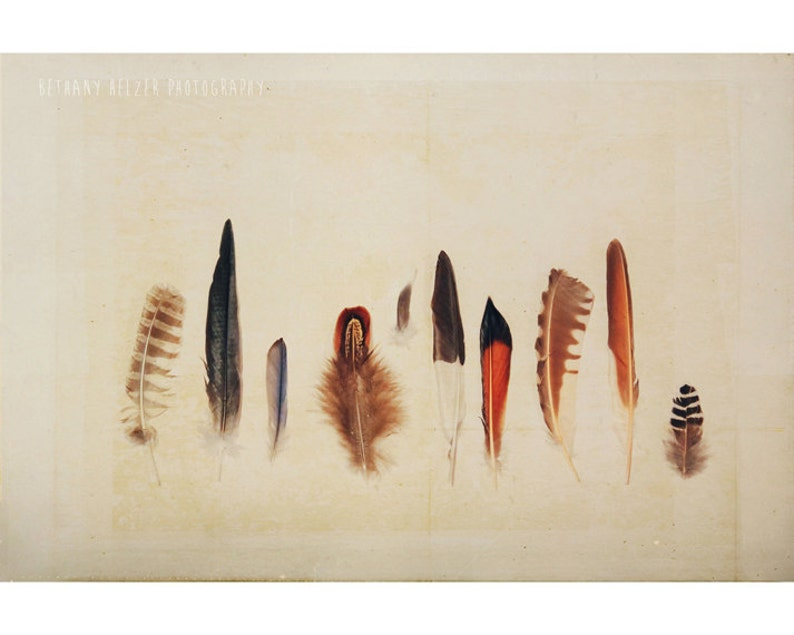 Nature Photography Feather Collection Still Life image 0