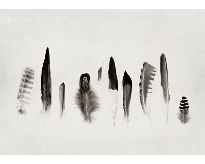 Still Life Photography Nature Photography Feather 5x7 image 0