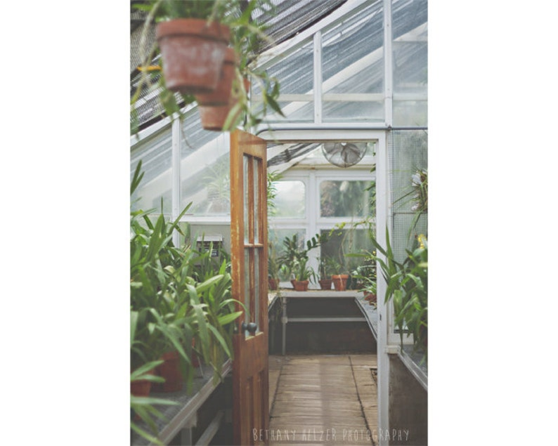 Nature Photography Dreamy Photography Greenhouse Print image 0
