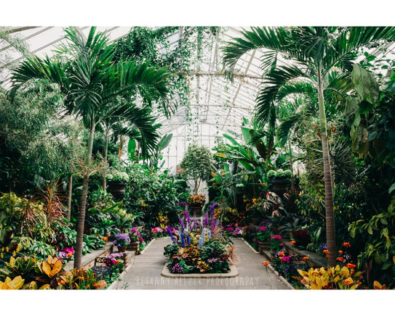 The Main Greenhouse Nature Photography Tropical Decor Palm image 0