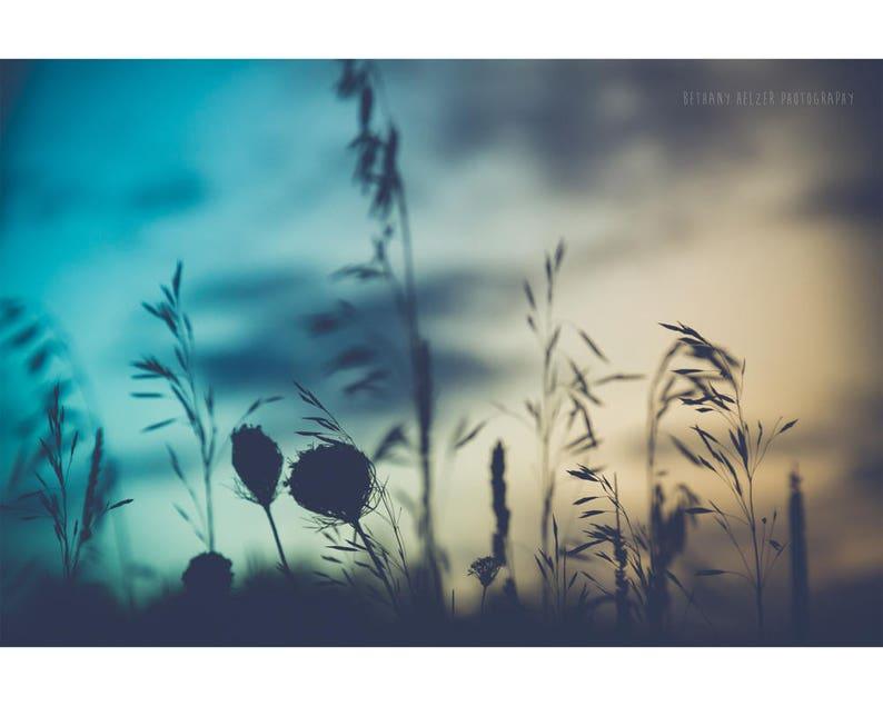 Nature Photography Rustic Decor Silhouette Art Botanical Print image 0