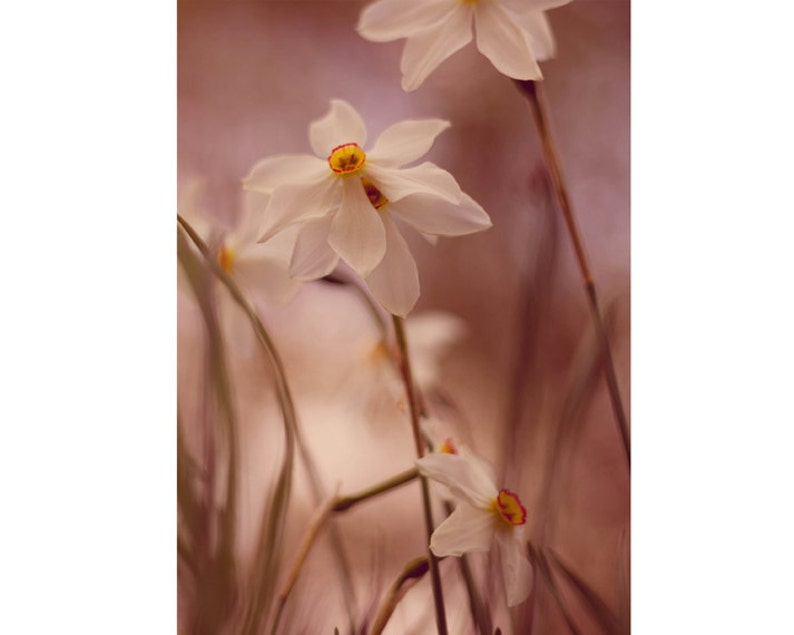 Flower Photography 5x7 Print Wildflower Print Nature image 0
