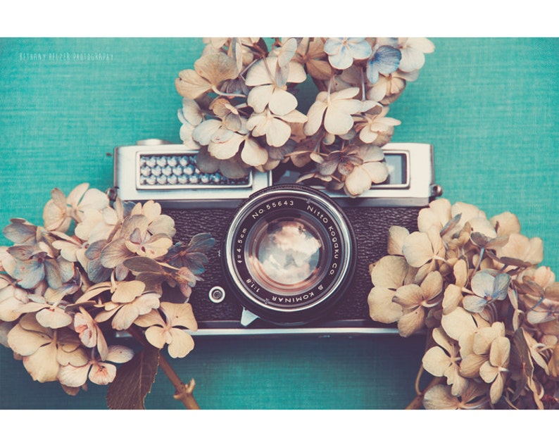 Still Life Photography Vintage Camera Blue Hydrangea Dried image 0