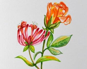 Rose and Honeysuckle, June birthday flower, original watercolor painting, birth month flower, June birthday gift