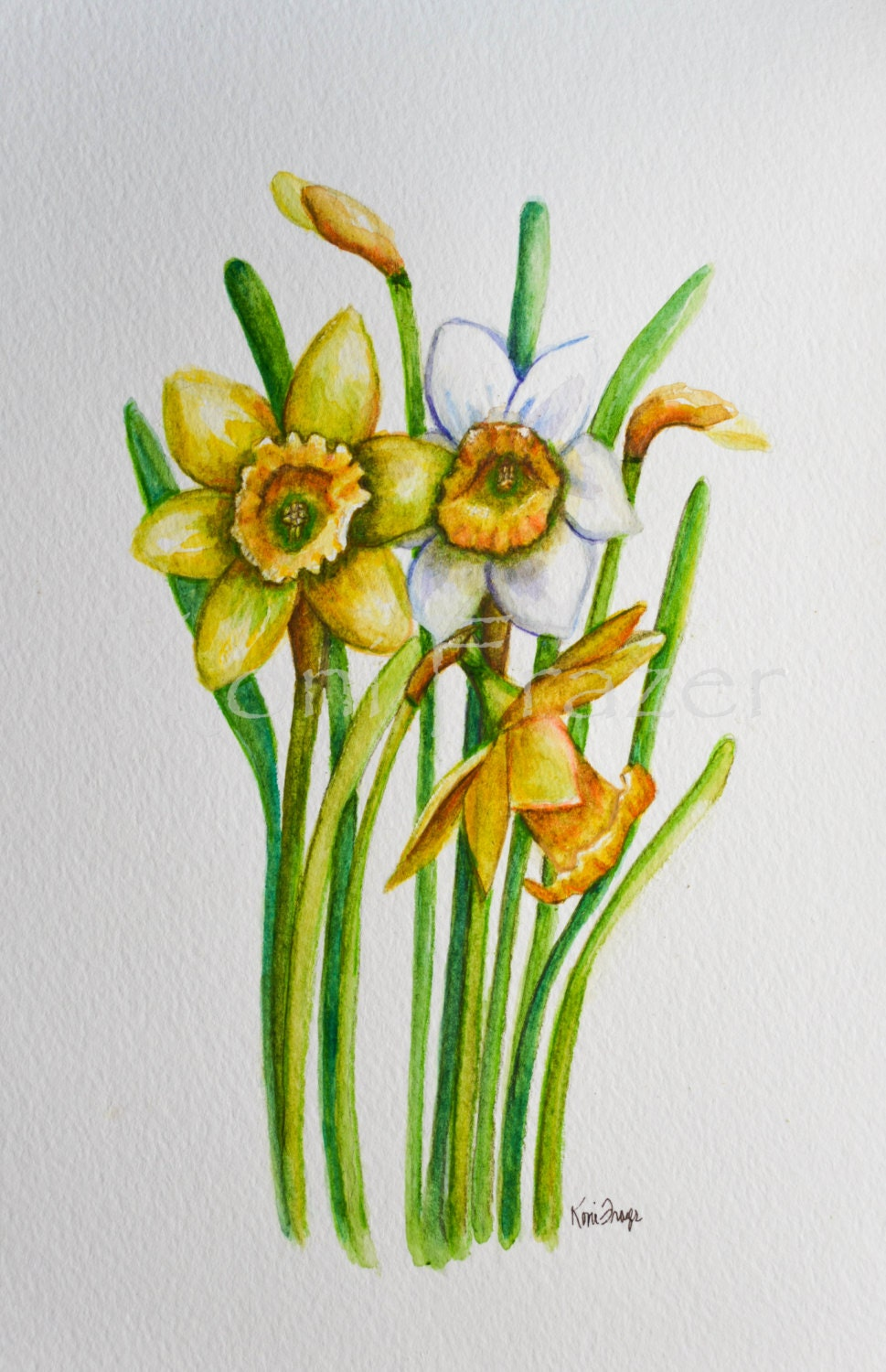 Daffodils March Birthday Flower Original Watercolor Painting Etsy