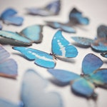Beautiful handmade silk butterfly hair clips, finished with sparkling Swarovski crystals. The perfect summer accessory!