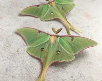 Silk Luna Moth Hair Clip. Hand cut from silk with Swarovski Crystals