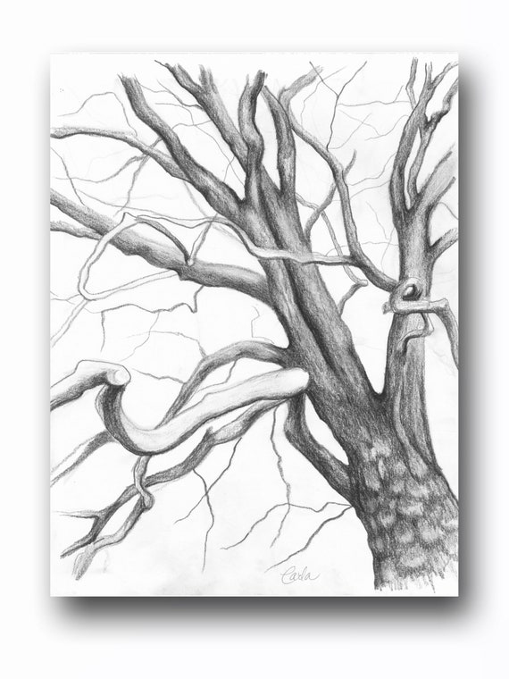 Tree Branches Charcoal Drawing, Botanical Wall Art, Black White Illustration, Tree of Life Art Sketch