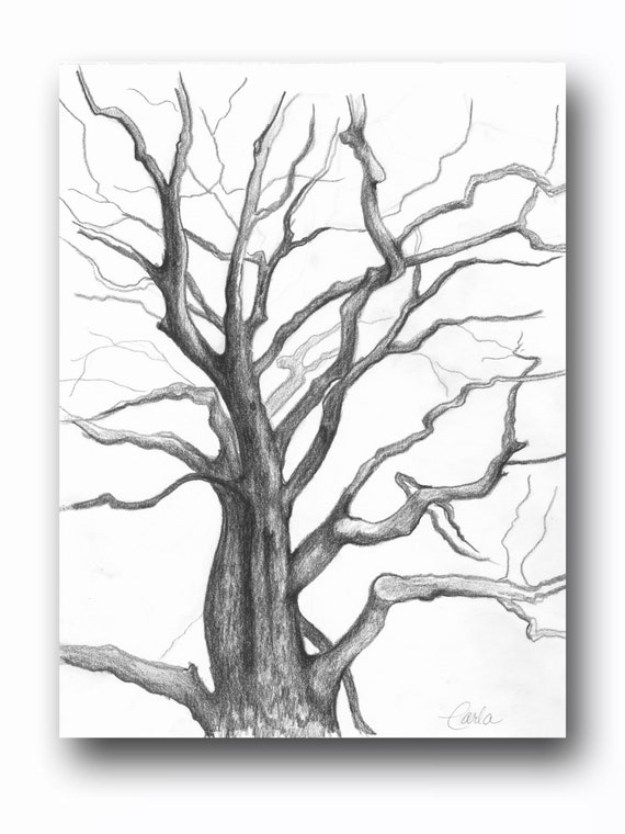 Tree of Life Wall Art Print , Branches Charcoal Drawing, Black White Botanical Illustration, Plant Sketch