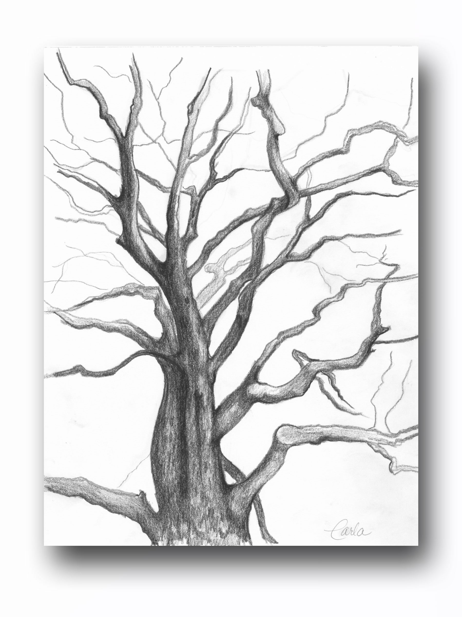 Tree Of Life Wall Art Print Branches Charcoal Drawing Black White