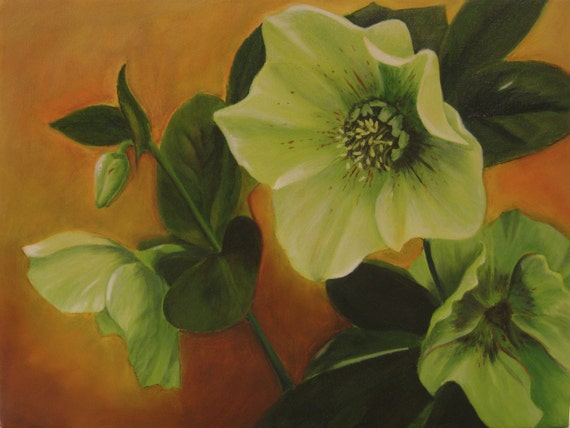 "Lenten Rose II 12x16"" Oil on Canvas"