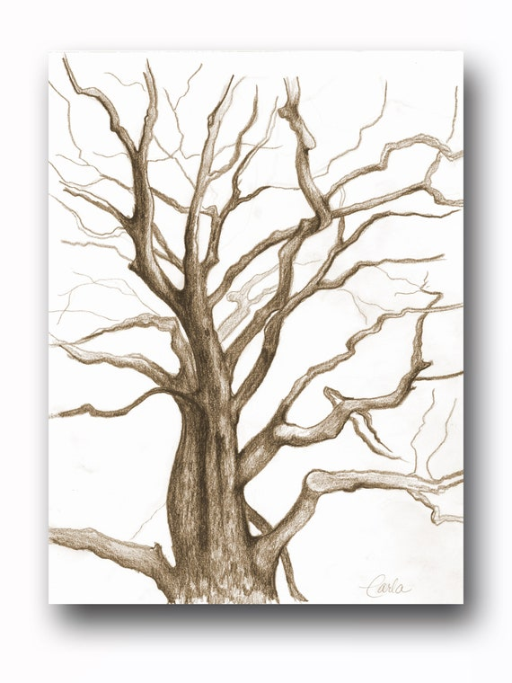 Sepia Tone Tree of Life Wall Art Print , Branches Charcoal Drawing, Black White Botanical Illustration, Plant Sketch
