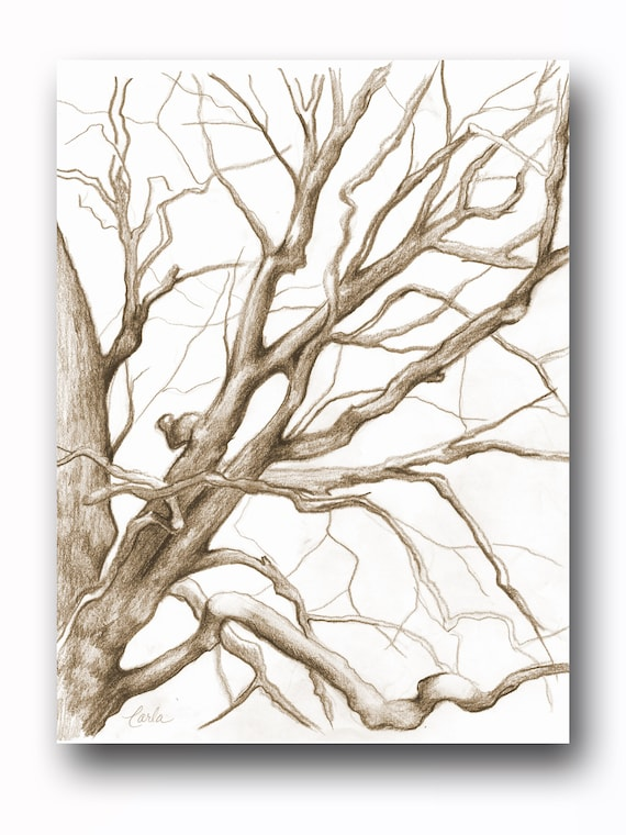Sepia Tree Illustration Print, Charcoal Drawing of Branches, Winter Tree Sketch, Botanical Art, Tree of Life Wall Art