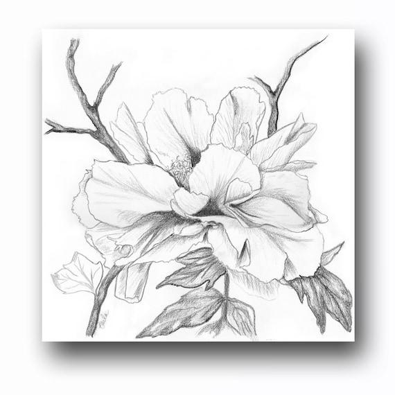 Peony Charcoal Drawing II