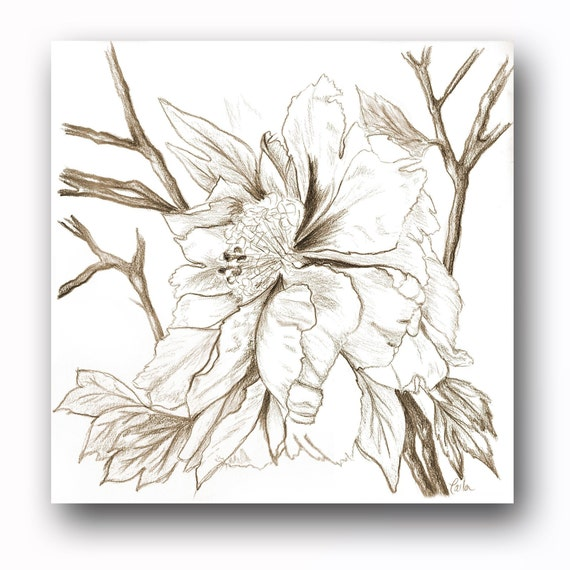 Peony Drawing in Sepia I