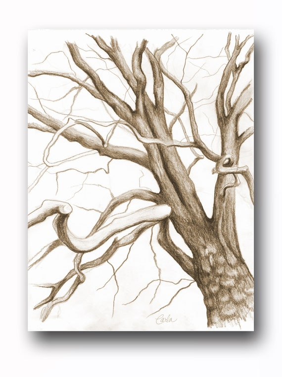 Sepia Tree Branches Charcoal Drawing, Botanical Wall Art, Black White Illustration, Tree of Life Art Sketch