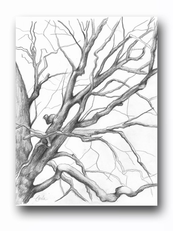 Tree Illustration Print, Charcoal Drawing of Branches, Winter Tree Sketch, Botanical Art, Tree of Life Wall Art