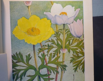 Botanical Print - Anemone - Flower Lithographs - vibrant color prints - double sided - ready to frame