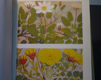 Botanical Print - Alpine Flowers - Flower Lithographs - vibrant color prints - double sided - ready to frame -  Swiss garden
