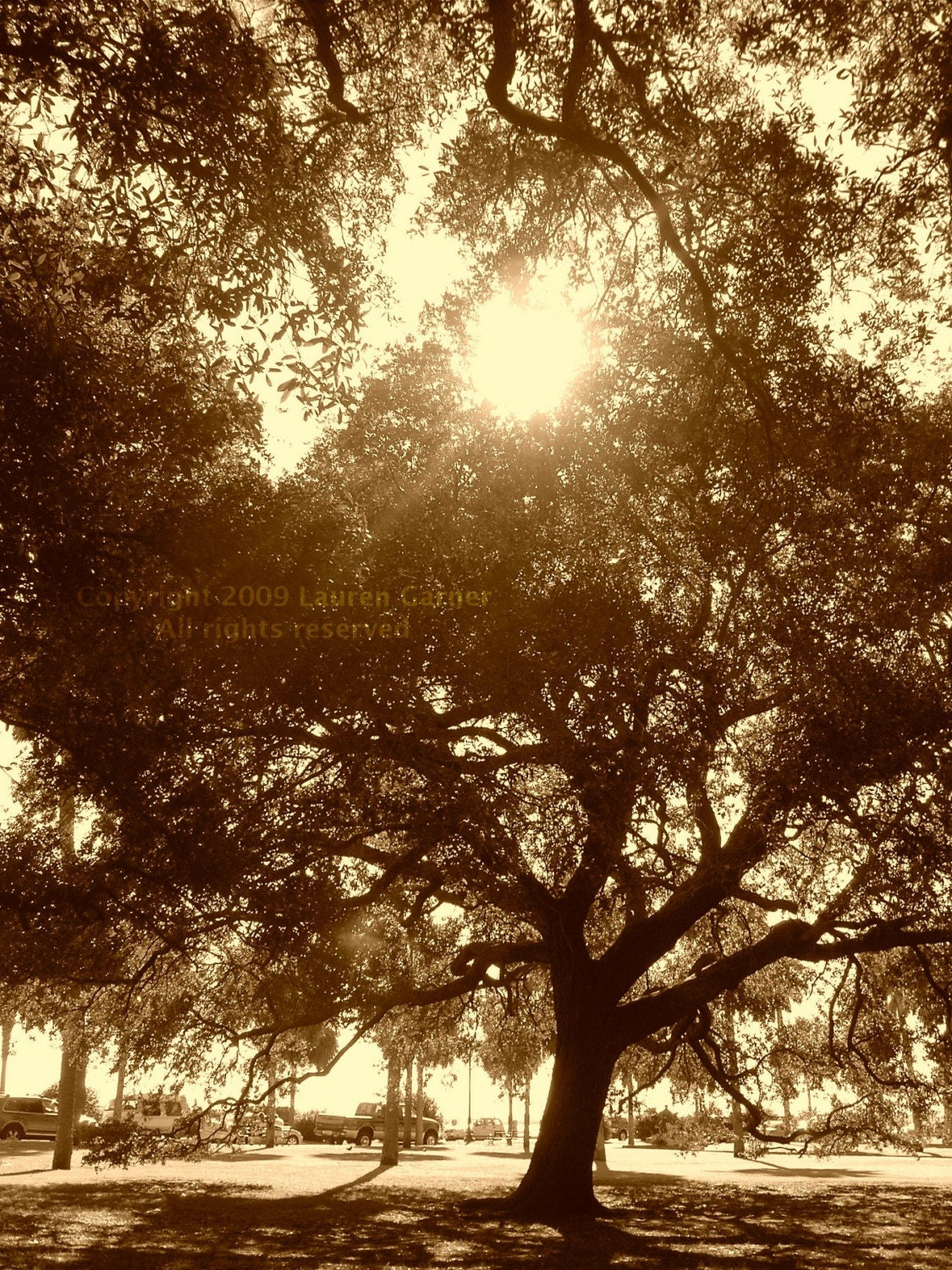 Ole Oak Tree Charleston SC Photography South Carolina