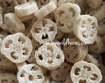 "SMALL 2"" LOOFAH CUTS- 7/8"" Thick, Natural Sponge Exfoliant, Luffah, Luffa, Loofa, Soap Embed, Two Wild Hares"