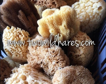 """BULK 5pc SEA Sponge, 4""""-5"""" Size, Natural, Yellow, Bath, Cosmetic, Soap, Natural & Sustainably Harvested, Free USA Ship, Two Wild Hares"""